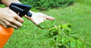 Bitki Koruma Bölümü Taban Puanları, Başarı Sıralaması ve Kontenjanları
